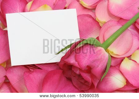 blank note on pink petals