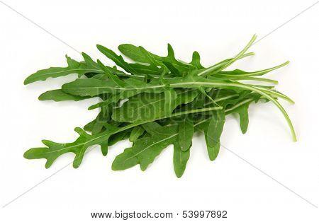 Eruca sativa isolated on white background