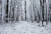 picture of blanket snow  - Fresh snow blankets a forest trail as it winds through the woods - JPG