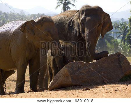 Elephant bathing at the orphanage