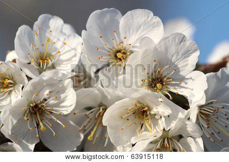 Spring flowers on branch