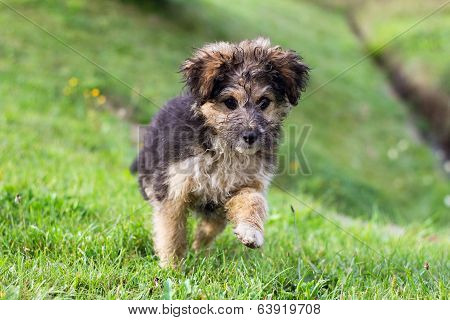Cute little dog Playing in the grass