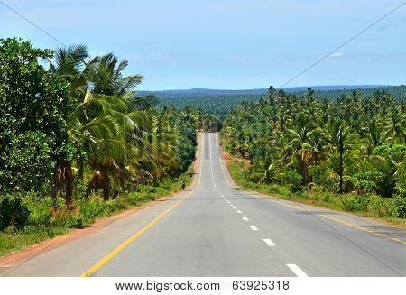 The Road Through The Jungle. Africa, Mozambique.