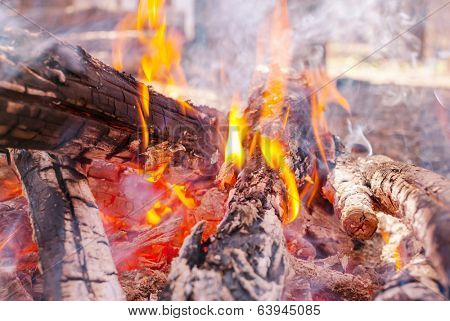 Bonfire in the fores