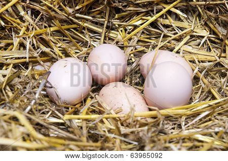 Real The Hen Roost With Eggs.