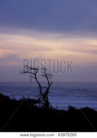 Tree Snag Silhouette At Sunset