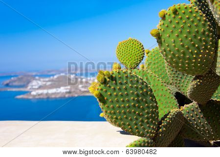 Beautiful Green Cactus On A Background Of Blue Sea On The Island Of Mykonos In Greece