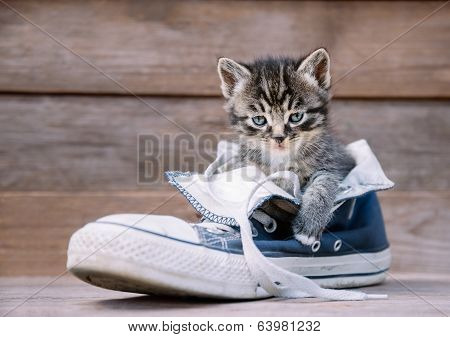 Kitten Is Sitting In A Shoe