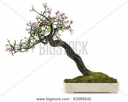 Bonsai flower plant tree in a pot