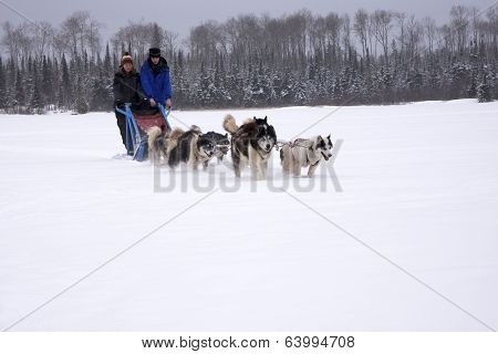 Dog Sledding Family