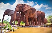 stock photo of herd  - Herd of elephants pass by river in Kenya - JPG
