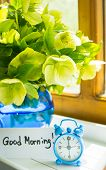 stock photo of helleborus  - Helleborus flowers in the vase on the window - JPG