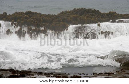Tidal Pool wave