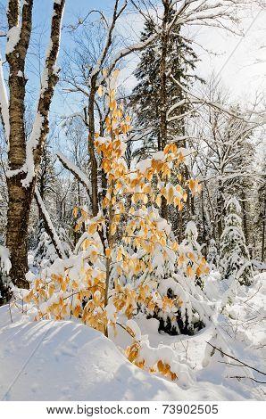 Winter Scenes After Snow Storm