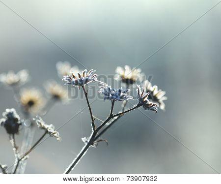 frozen plant first autumn freezing