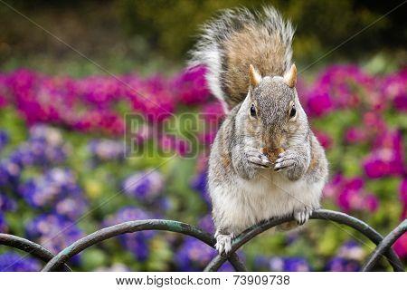 Squirrel eating cookies