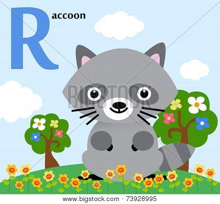 Animal alphabet for the kids: R for the Raccoon