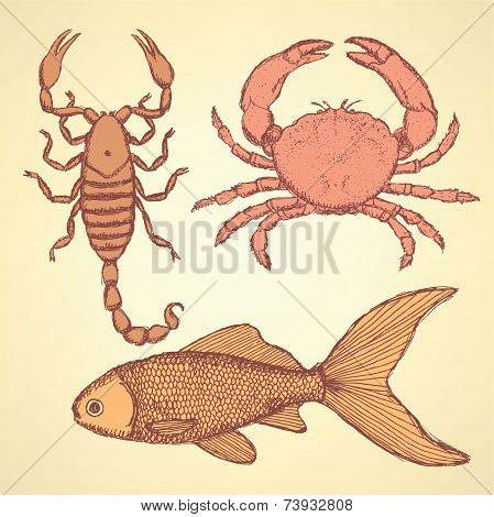 Sketch Cute Crab, Scorpion And Fish