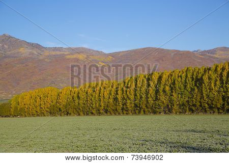 Morning Fall Frost And Yellow Poplar Trees And Orange Mountains