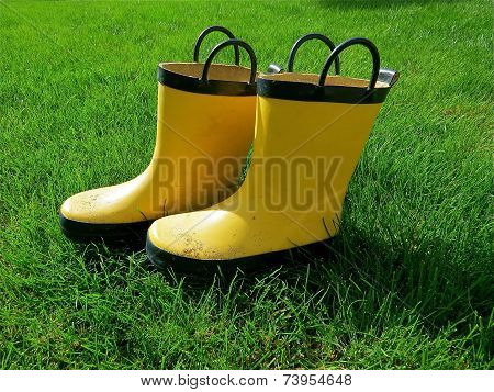 Yellow Gumboots