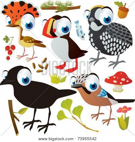 vector cartoon birds set: king flycatcher, quail, crow, jay, puffin