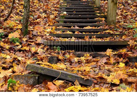 Old wooden stairs in the forest
