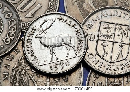 Coins of Mauritius. Mauritian rusa deer (Rusa timorensis) depicted in the Mauritian half rupee coin.