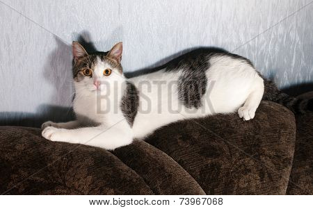 White Cat With Spots Lying On Back Of Sofa