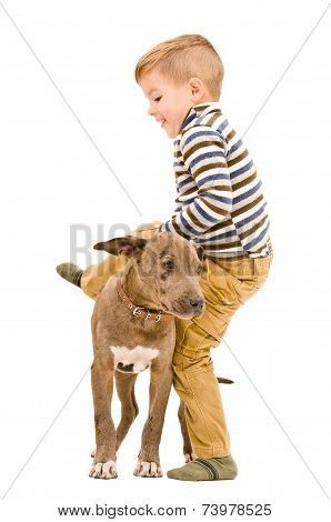 Boy having fun playing with a puppy pitbull