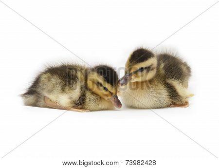 Two Little Baby Ducks