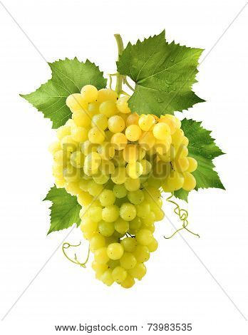 Yellow Grapes Bunch Isolated On White Background