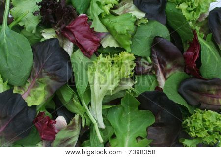 Mixed Green Lettuce Background
