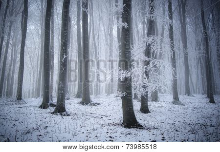 Winter wonderland in forest with fog and frost