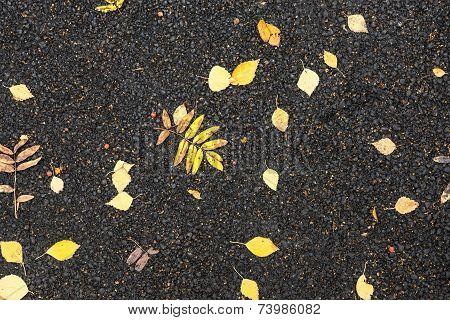 Autumn Foliage On Asphalt