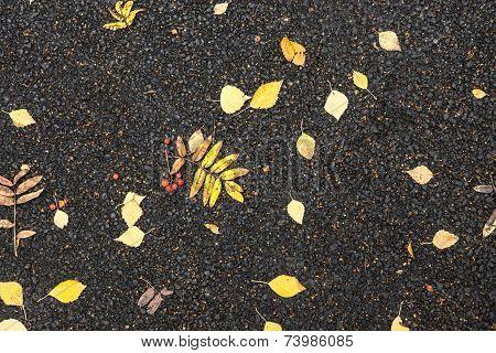 Autumn Foliage On Asphalted Road