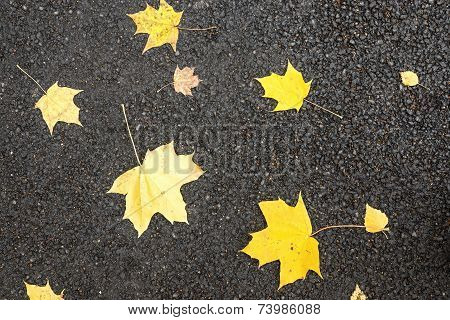 Maple Foliage On The Asphalted Road
