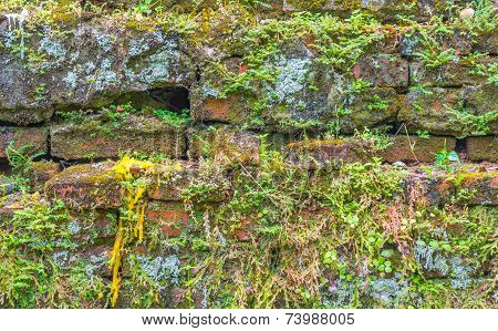 Old Mossy Wall