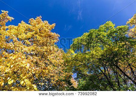 Beautiful Colors Of Autumn Landscape