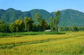stock photo of mountain chain  - Beautiful Vietnamese village view scene with chain of mountain thatched house on yellow paddy field cover by green tree eco environment place of Vietnam at Mekong Delta - JPG