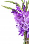pic of gladiolus  - bunch of gladiolus flowers close up isolated on white background - JPG