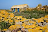 stock photo of lichenes  - Old stone farm covered with yellow lichen in Quemenes island - JPG
