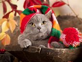 stock photo of gnome  - cat in gnome hat - JPG