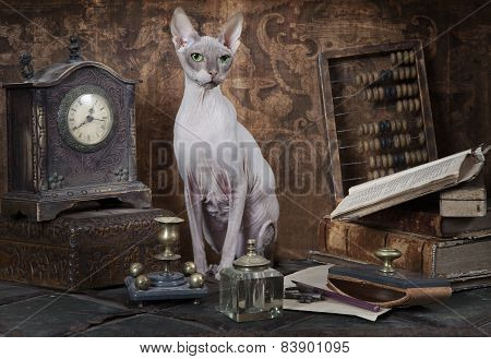 Portrait Of Don Sphinx Cat
