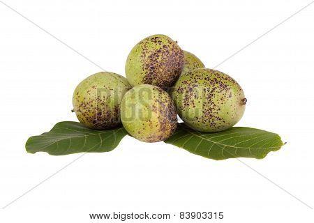 Geen unripe Walnuts