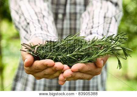 Farmer With Rosemary