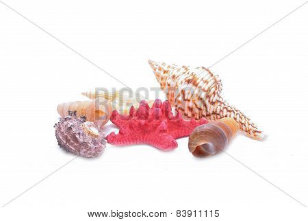 Red Starfish and seashells on white background