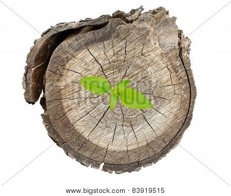 Plant Growing On Tree Stump Isolate On White Background