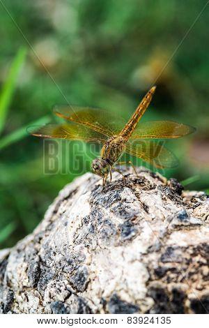 Dragonfly landing