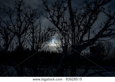 Silhouette Of Trees In Winter