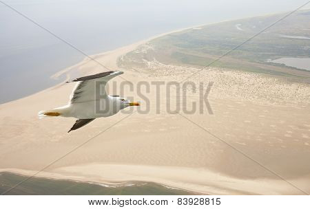 Aerial View Of Seagull Flying Above Beach In The Netherlands